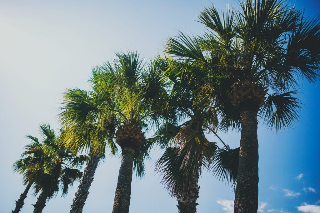 Sunshine on My Mind with winds of change palm trees